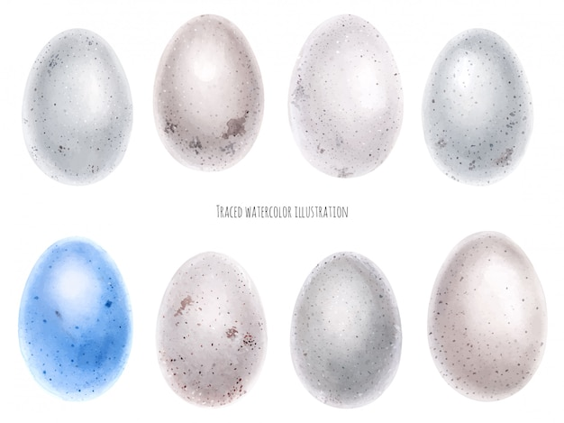 Watercolor set of bird eggs
