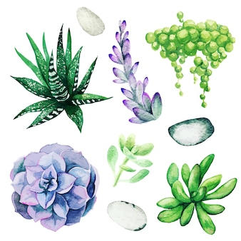 Watercolor set of bright hand drawn succulents, hand drawn