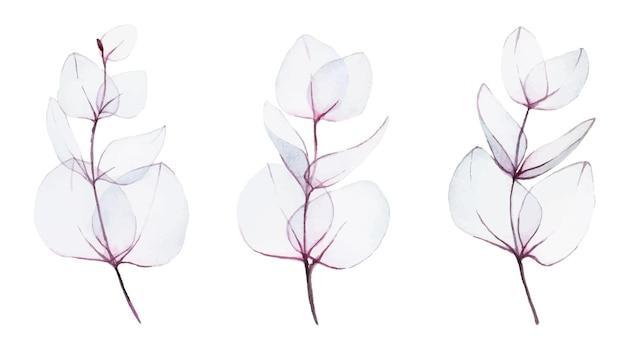 抽象的な透明なユーカリピンクの葉の水彩セットコレクション