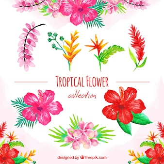 Watercolor set of colorful tropical flowers