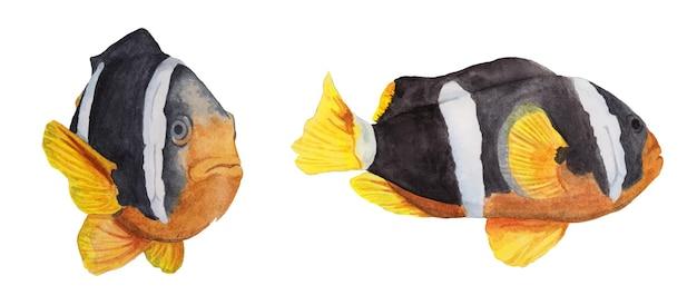 Акварельный набор рыба амфиприон черный с белыми полосами и оранжевыми плавниками
