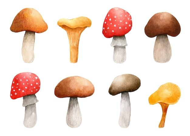 Watercolor set of forest mushrooms. amanita,  brown cap boletus, chanterelle clipart