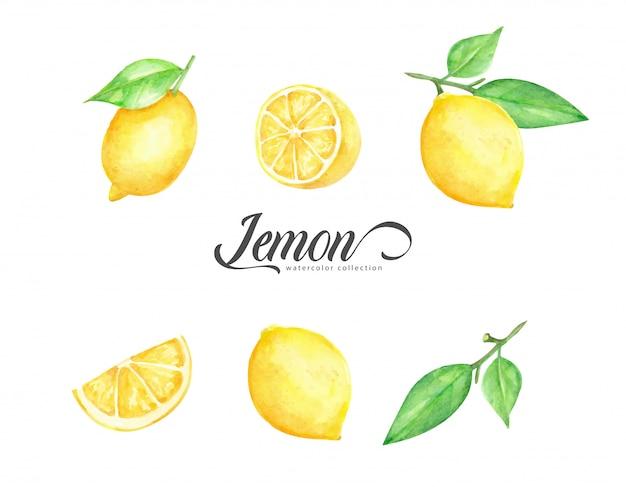 Watercolor set of fresh lemon fruit