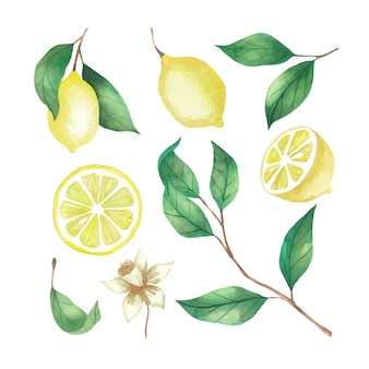 Watercolor set of lemons, lemon slices and twigs