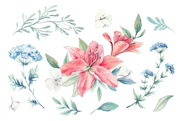 Watercolor set of lilies, buds and leaves.