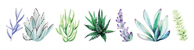 밝은 손으로 그린 succulents의 수채화 세트
