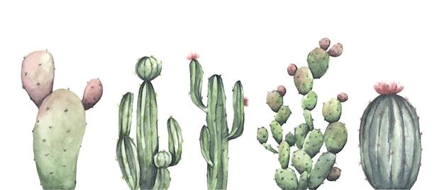 흰색 바탕에 선인장의 수채화 세트입니다. 꽃 그림