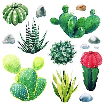 선인장 식물과 다육 식물의 수채화 세트