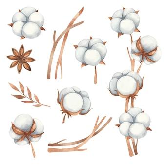 목화 꽃, 아니 스 및 갈색 그늘에서면 나뭇 가지에서 꽃 요소의 수채화 세트