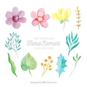 Watercolor set of floral elements