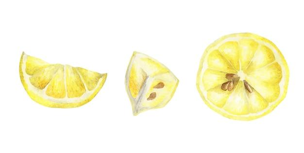 レモンの水彩セット。