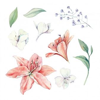 백합, 꽃 봉 오리와 잎의 수채화 세트 프리미엄 벡터