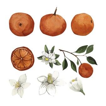Акварельный набор оранжевых листьев и цветов