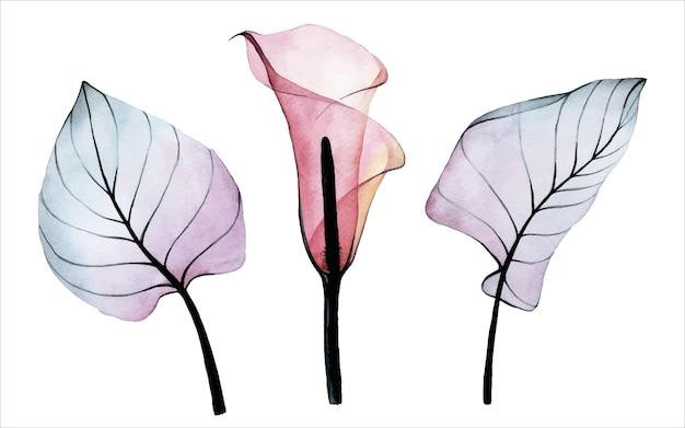 Акварельный набор прозрачных тропических цветов и листьев розовый цветок каллы и листья картинки