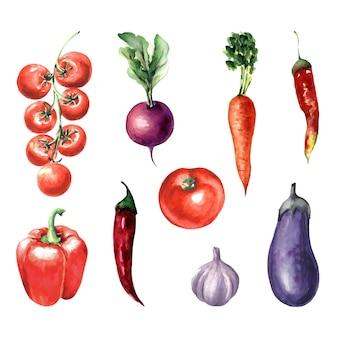 Акварельный набор урожая овощей