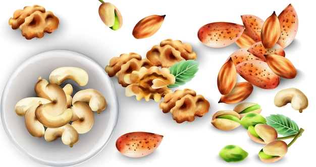 Watercolor set of organic nuts