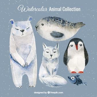 Watercolor set of polar animals