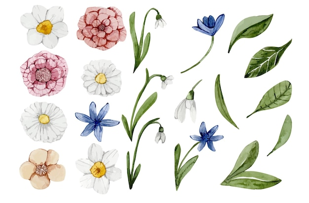 Watercolor set of spring flowers hand painted