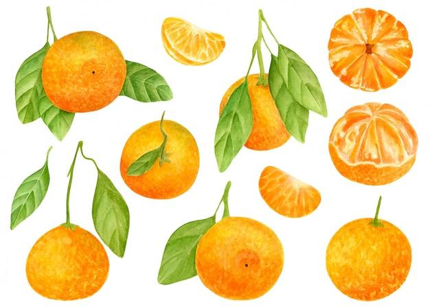 Watercolor set of sweet tangerines with leaves