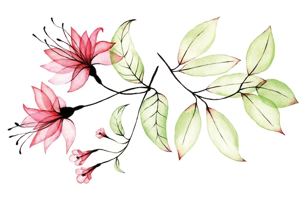 Watercolor set of transparent pink tropical flower hibiscus and green tropical leaves