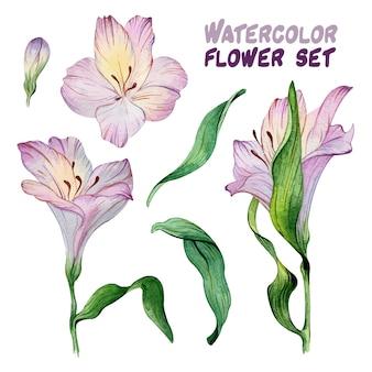 보라색 alstroemeria 꽃이 피는 수채화 세트