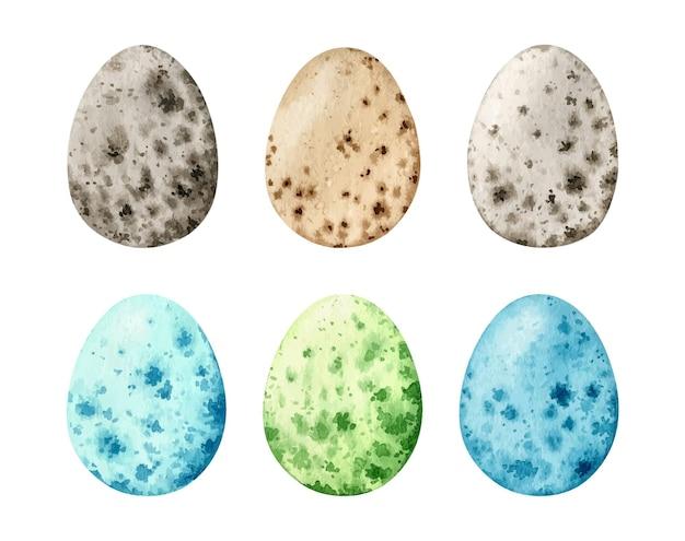 자연 및 색 메추라기 계란으로 설정 수채화