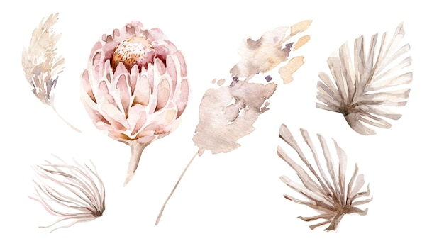 Watercolor set with protea dried foliage palm leaves bud pampas branches boho floral elements