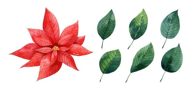 붉은 포인세티아와 녹색 잎이 있는 수채화 세트 크리스마스 스타 꽃