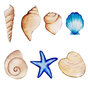 Watercolor shells collection