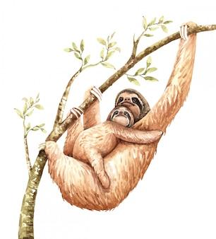 水彩ナマケモノと赤ちゃんが枝にハングします。