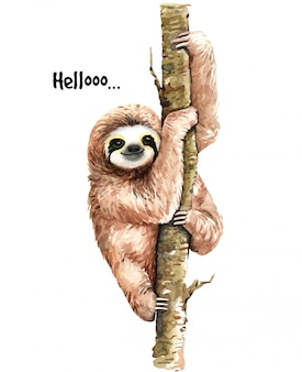 Watercolor sloth illustration. tropical animal.