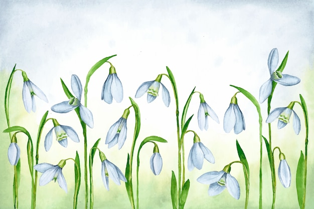 Watercolor spring background with snowdrops