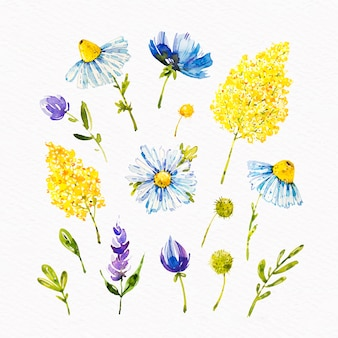 Watercolor spring blooming flowers collection