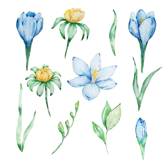 Watercolor spring illustration. set of watercolor crocus branches, yellow flowers and leaves. botanical illustration