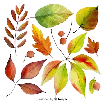 Watercolor style autumn leaves collection