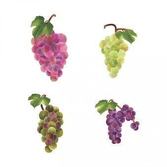 Акварель стиль винограда