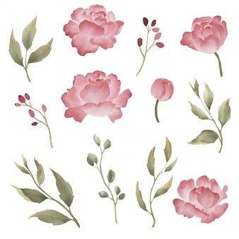 Коллекция цветочных элементов пиона в акварельном стиле