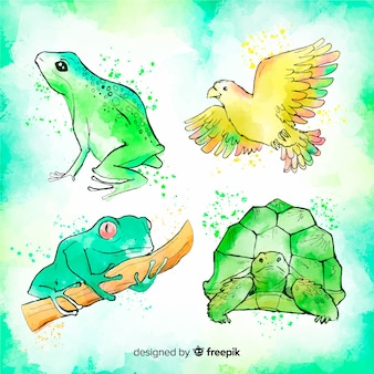 Watercolor style tropical animal collection