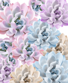 Watercolor succulent plant pattern