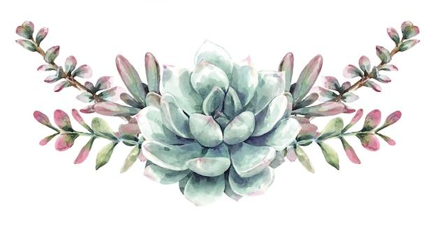 Букет акварель суккулентов. кактус, кактусы и сочные краски.