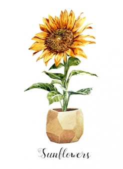 Watercolor sunflower in a flower pot