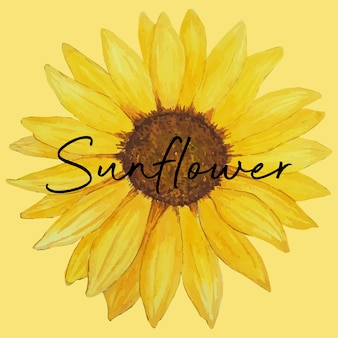 Watercolor of sunflower, hand drawn floral illustration isolated