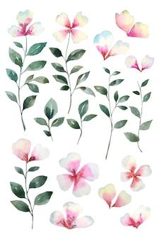 녹색 잎과 수채화 달콤한, 화려한 꽃 정렬 격리.