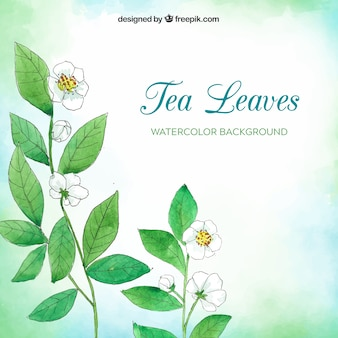 Watercolor tea leaves background