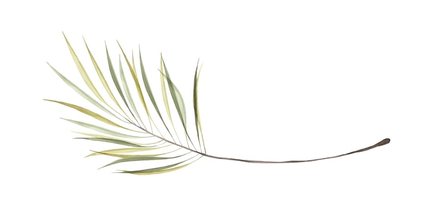 Watercolor transparent green palm leaves isolated on white background. art botanical watercolor hand-painted. perfect for invitations, greeting cards, or wall decoration.