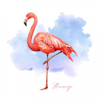Watercolor tropical bird flamingo with colorful background.