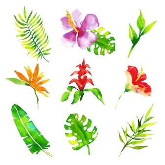 수채화 열 대 꽃과 잎 컬렉션