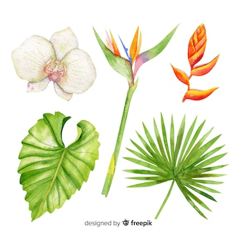 수채화 열 대 꽃과 잎