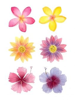 수채화 열 대 꽃 모음입니다.