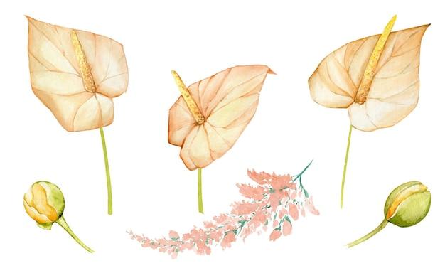 Иллюстрация акварель тропические цветы